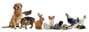 Sunaris Moringa Anwendung bei Tiere